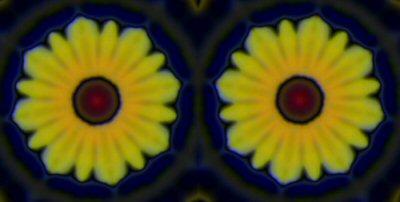 Chrysanths4