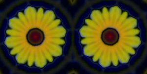 Chrysanths3