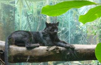 Blackcat2_2