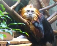 Monkey_cpz